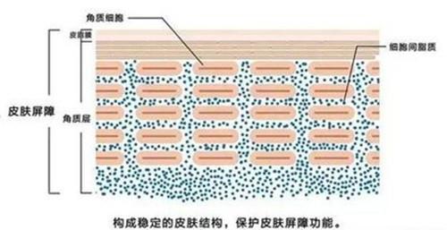 敏感肌如何快速修复肌肤屏障?不要再自毁长城了