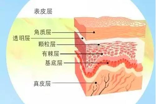 油敏肌出油严重是什么原因造成的?难道角质层过厚的原因
